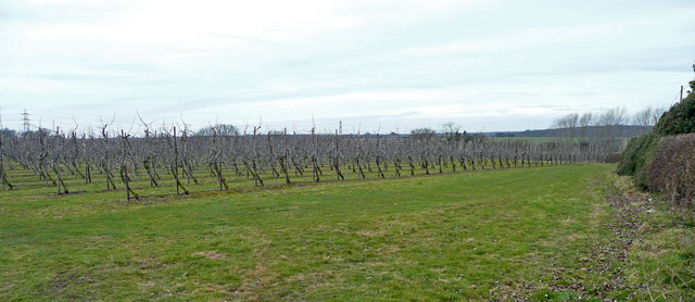 New apple orchards