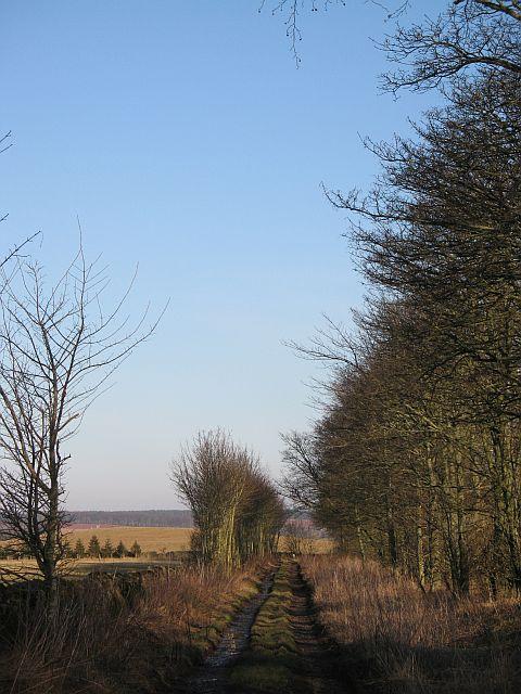 Road to Rumbleton