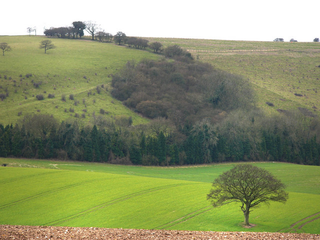 Single tree in a field, south of South Farm