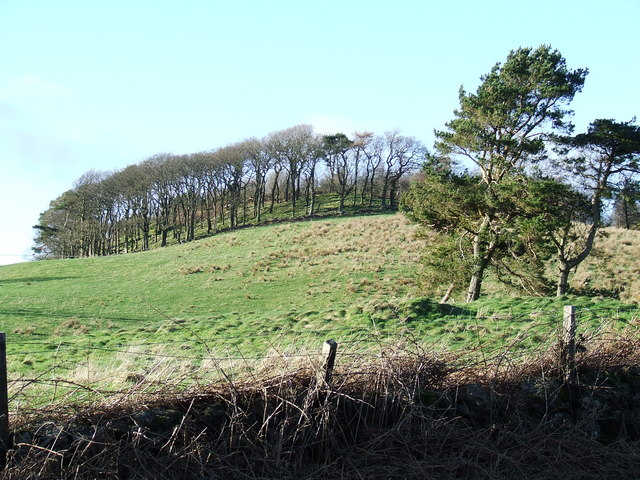 Craigmarloch Wood