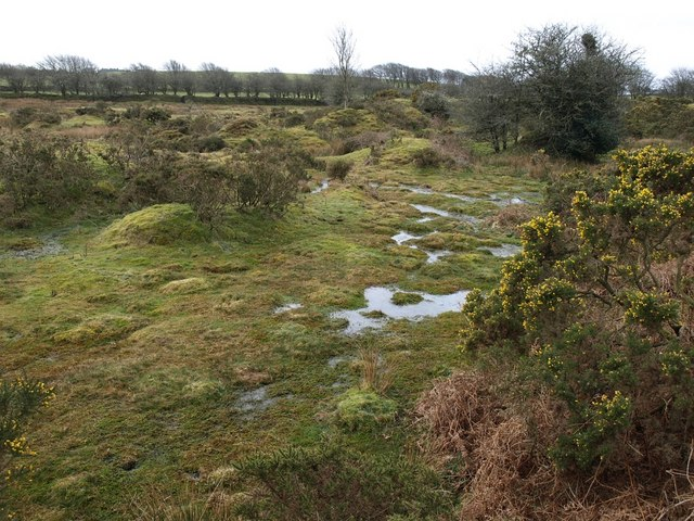 Marshy land below Cannaframe