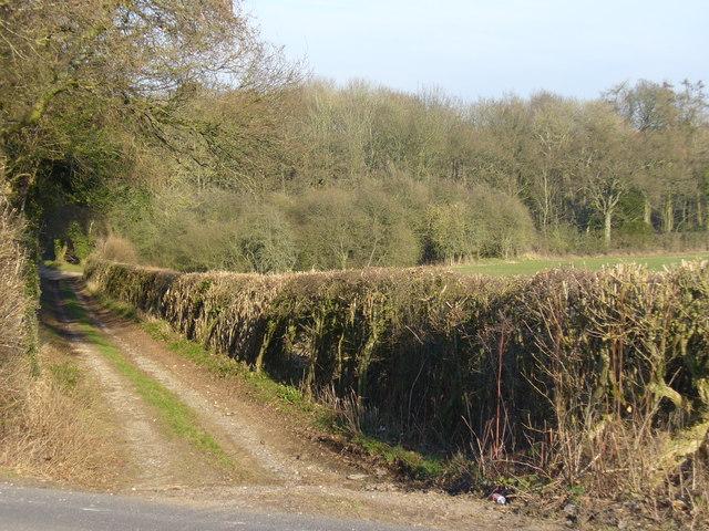 Trackway to Tidgrove