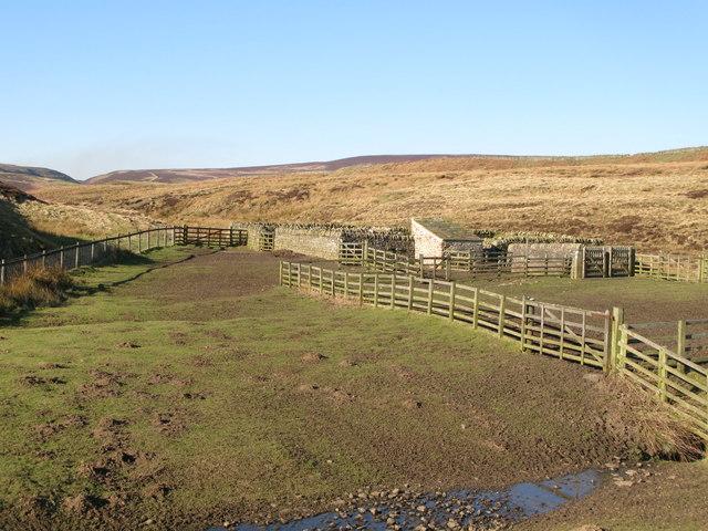 Sheepfold and moorland around Espy Sike