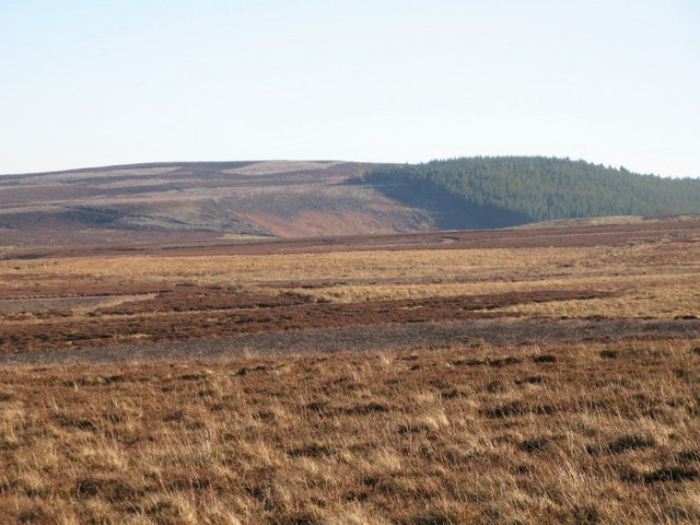 Harwoodshield Fell (6)