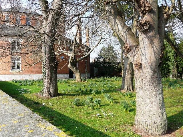 Garden, Oldway Mansion, Paignton
