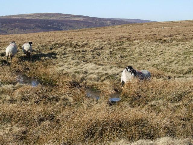 Harthope Moor