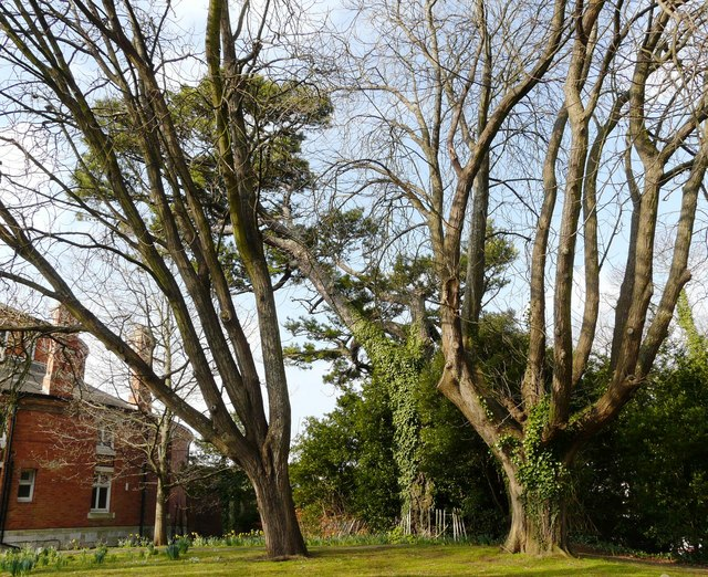 Trees, Oldway Mansion, Paignton