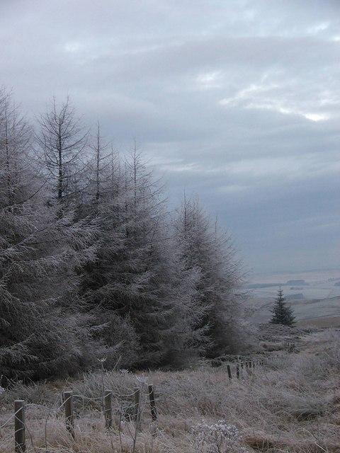 Sharp Frost near Kielder