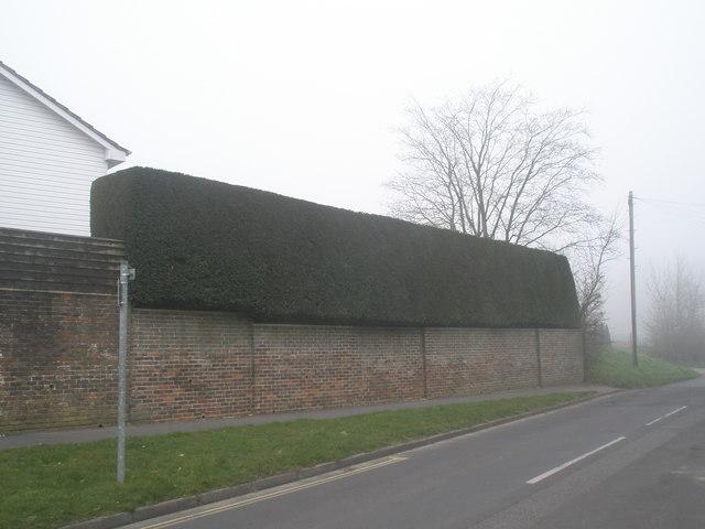 Superb hedge in Tilmore Road
