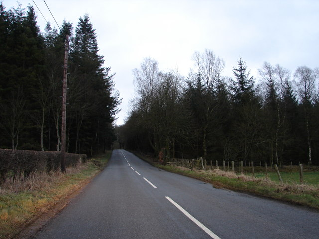 Road and Woods Near Scroggs Bank