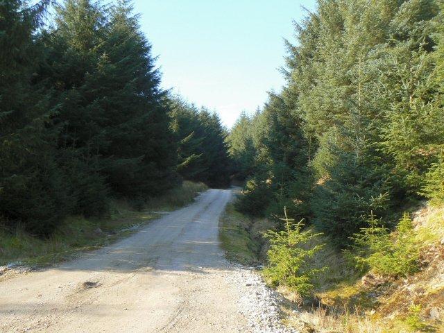 Forestry road in Coat Weggs plantation