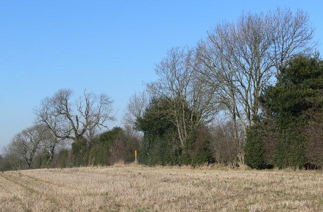 Farmland near Leicester Forest West