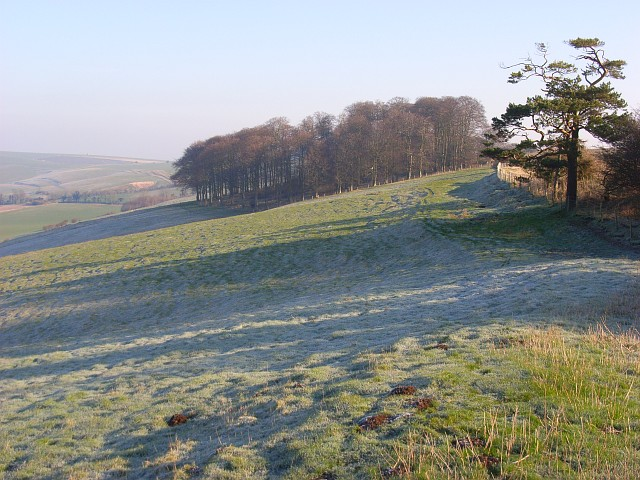 Downland and copse, Lower Upham