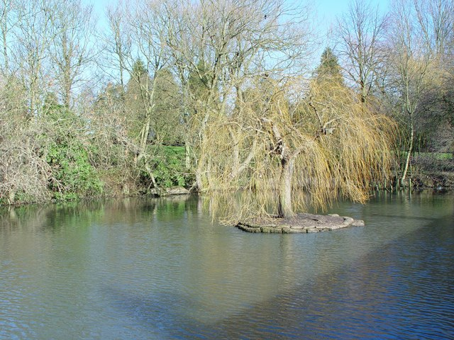 Willow in the pond, Wakington