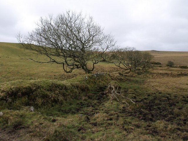 Field boundary near Trevendick