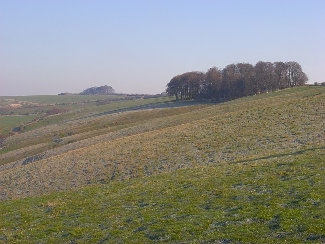 Downland above Lower Upham