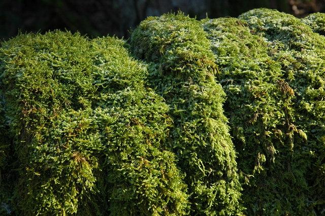 Moss near Wildboarclough