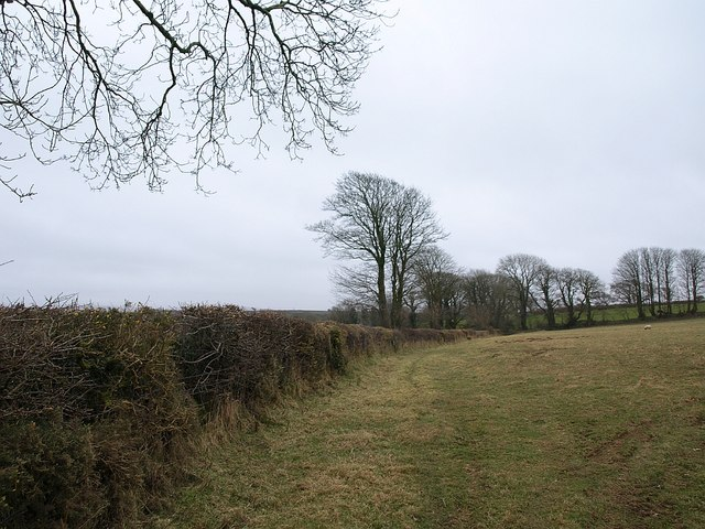 Hedge and trees near Laneast
