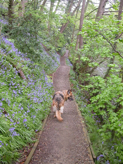 Bluebell Path,Walmsley Bridge