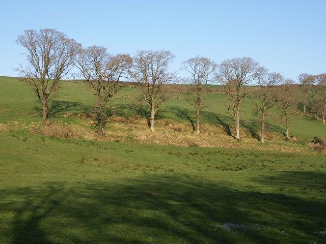 Trees near Tythecott Mill
