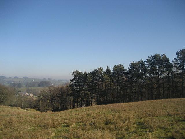 Birkett Wood
