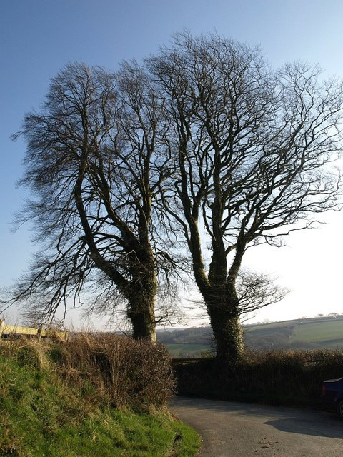 Beeches near Craneham