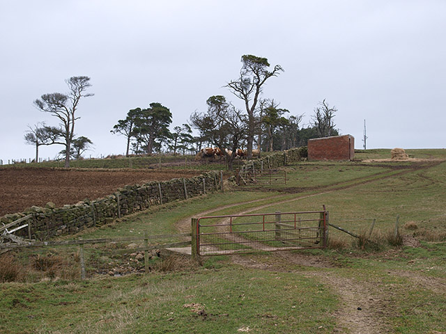 Another bridleway to Stang Howe