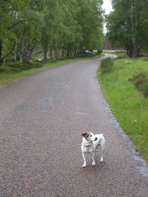 Road North of Tolvah, Glen Feshie