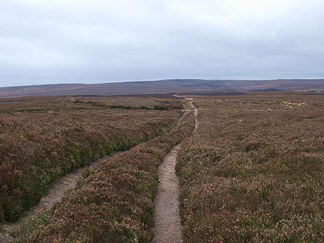 Track across Roxby High Moor