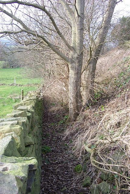 Footpath blocked by vegetation
