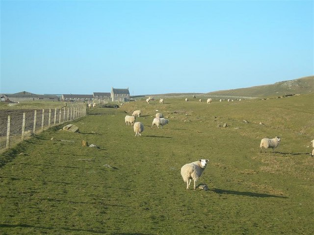 Coull Farm Grazing