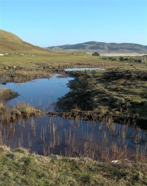 Marshy Pools