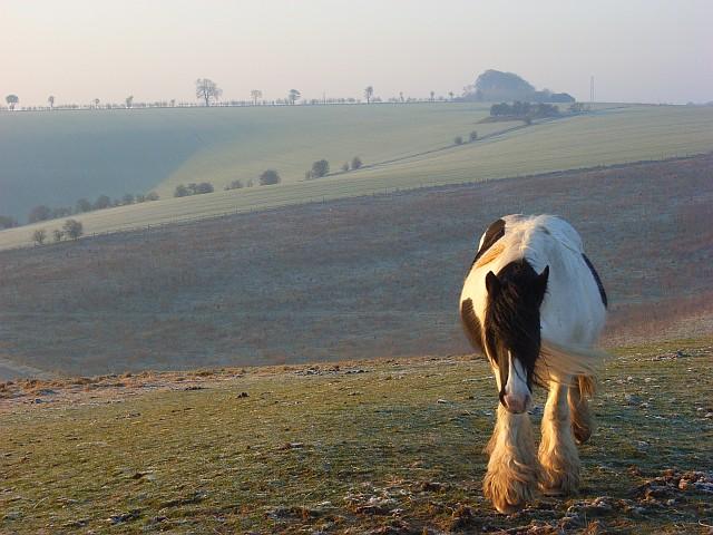 Horse on downland, Liddington