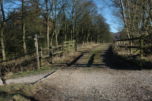 Footpath junction, Macclesfield Forest