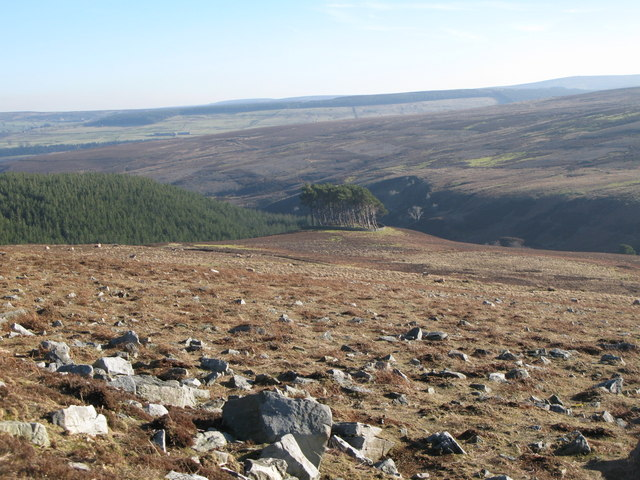 Moorland below Hill 402