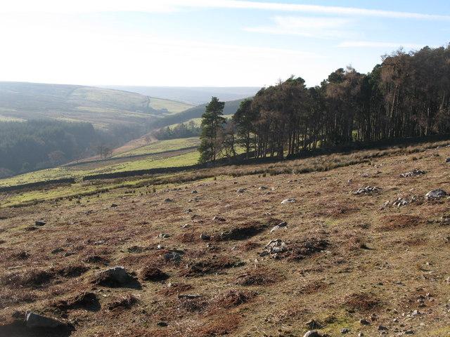Moorland below Hill 402 (2)