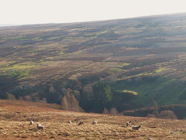 The valley of Beldon Burn (3)