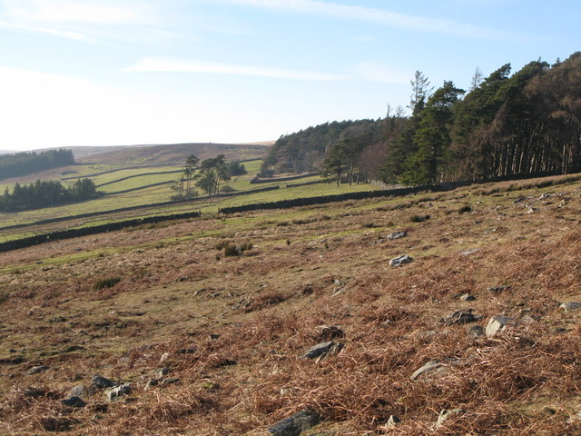 Moorland and pastures near Riddlehamhope
