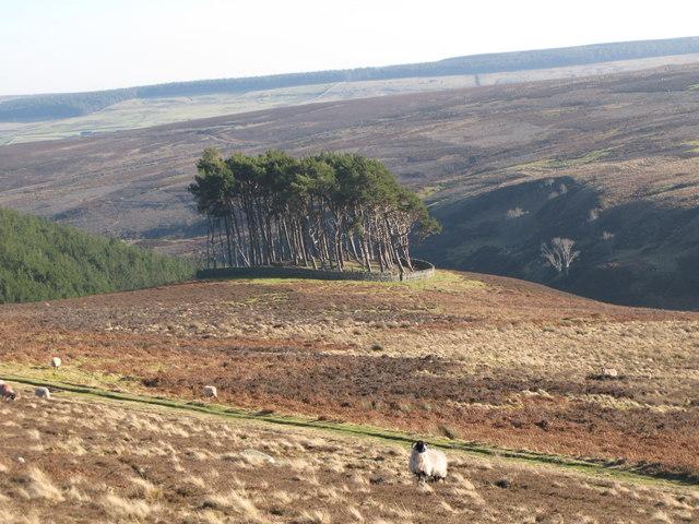 Moorland, track and plantation on tumulus above Beldon Burn