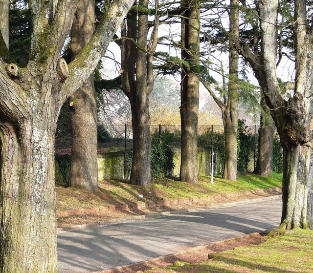 Stand of trees, Oldway mansion, Paignton