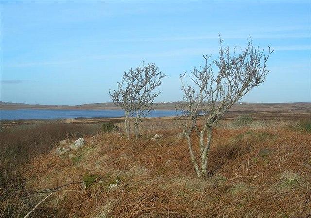 Loch Gorm View