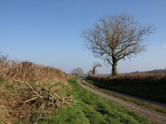 Lane towards Southcott