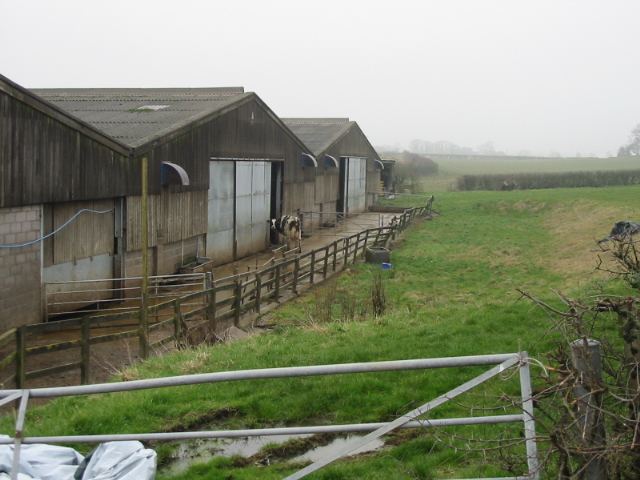 Cattle sheds at Priston New Farm