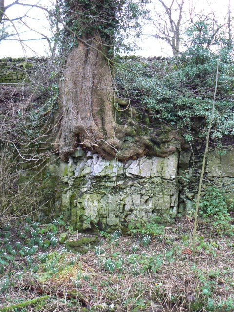 Rooted in limestone