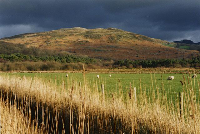 Field at Ynyshir
