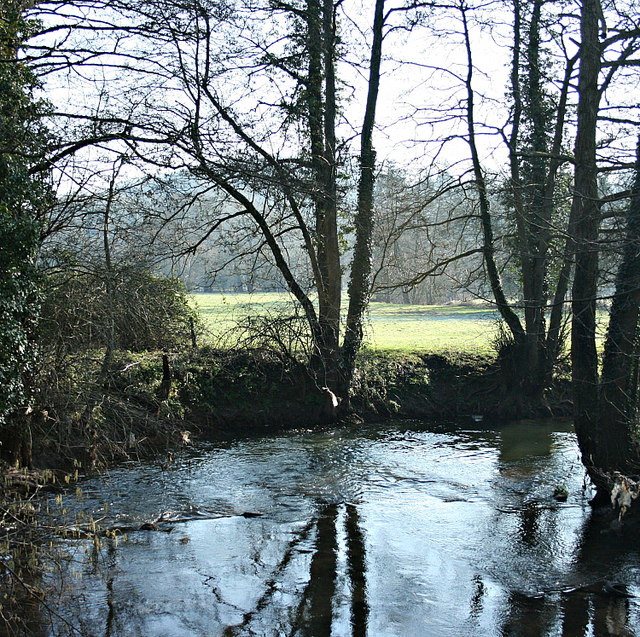 2008 : The Wellow Brook, Lower Writhlington