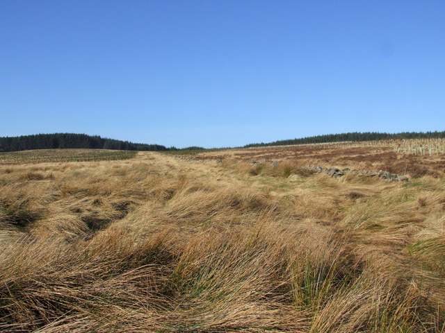 Thorneyburn Common