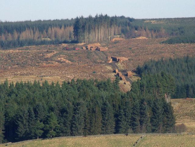 Falstone Forest