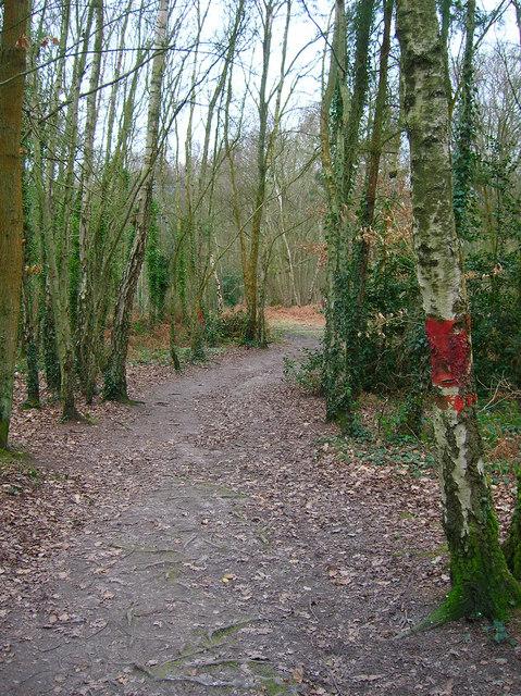 Trail through High Woods