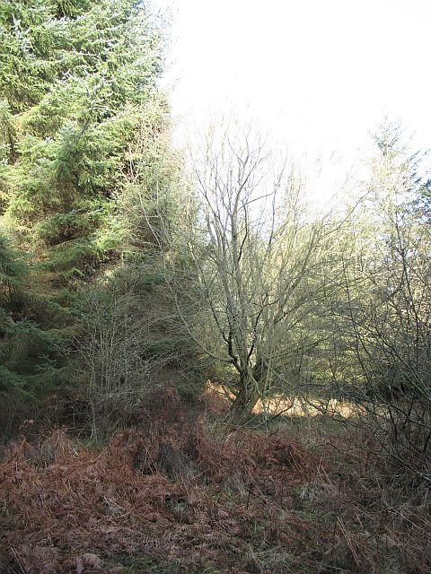 Ros Hill Wood